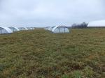 Farrowing Huts