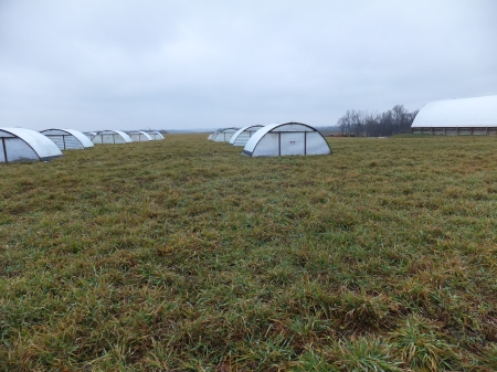 Farrowing Huts