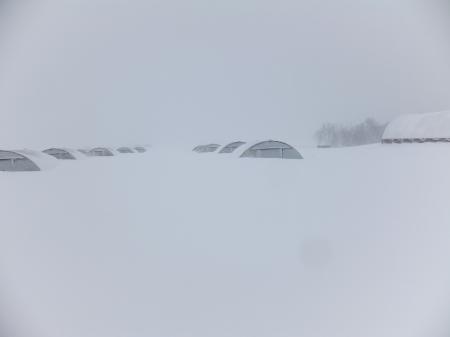 Winter Storm Draco