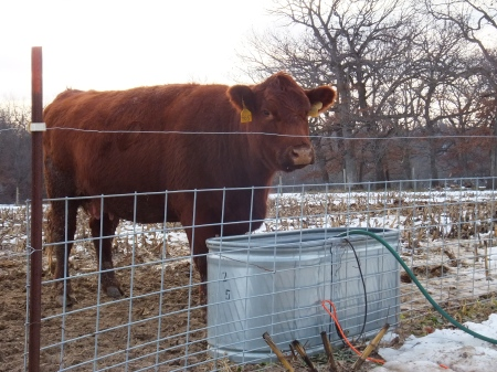 Cattle Tank Waterer