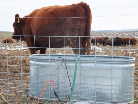 Tank Waterer and Cows Eating Hay