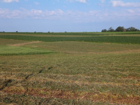 Contour Strip Cropping 2013