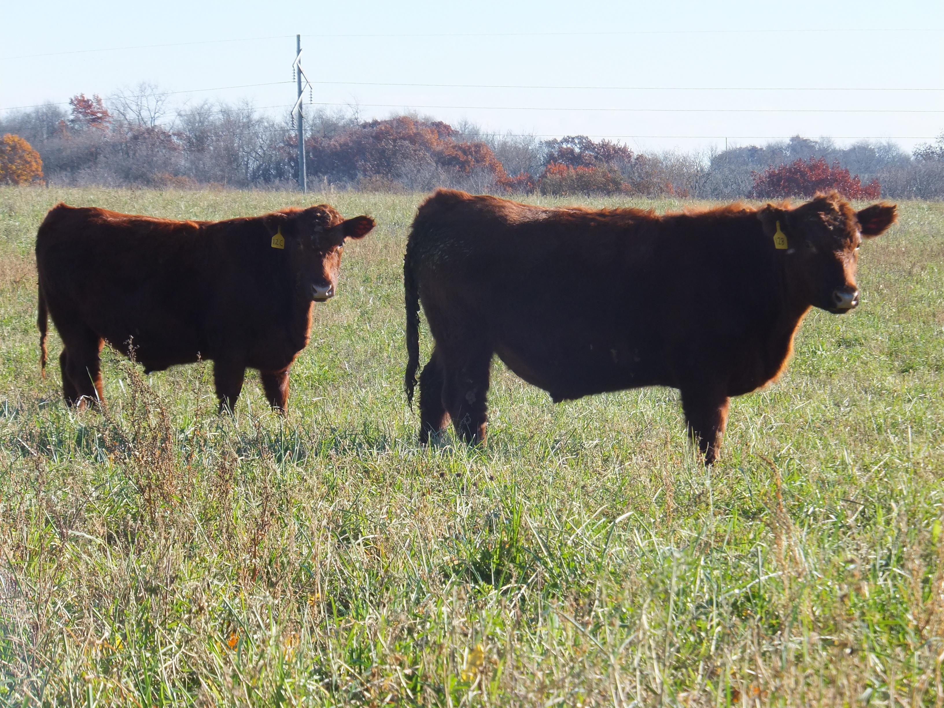 feeders grain tag feeder farm cattle forge hog bulk elkhorn